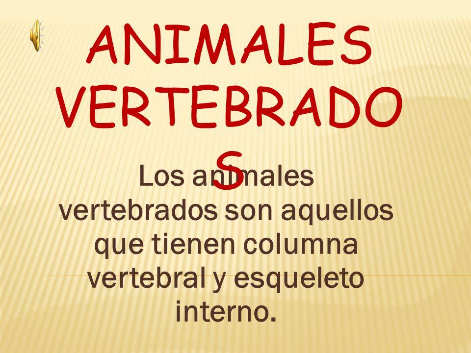 ANIMALES VERTEBRADOS Los animales vertebrados son aquellos que ...