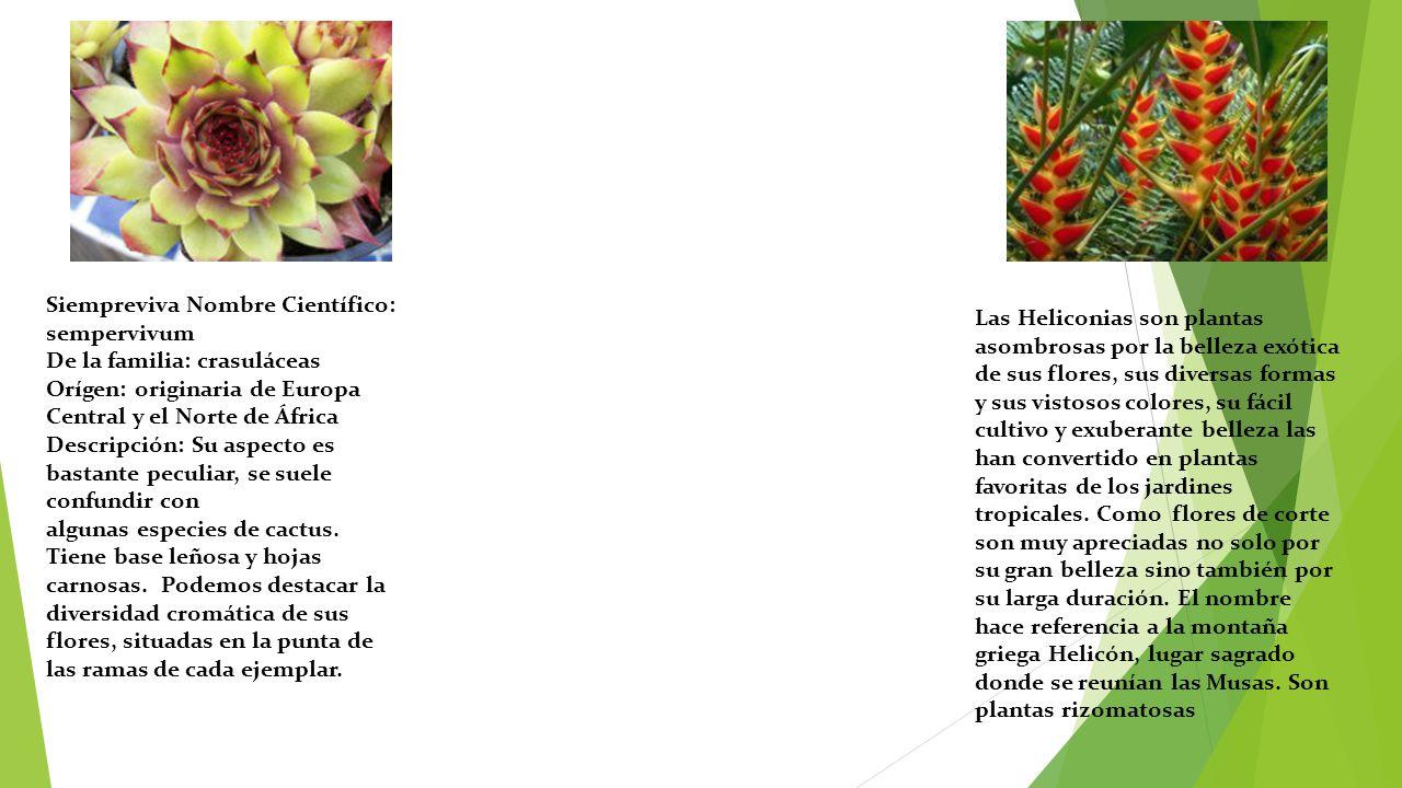 Plantas carn voras ex ticas ppt descargar for Tipos de cactus y sus nombres comunes