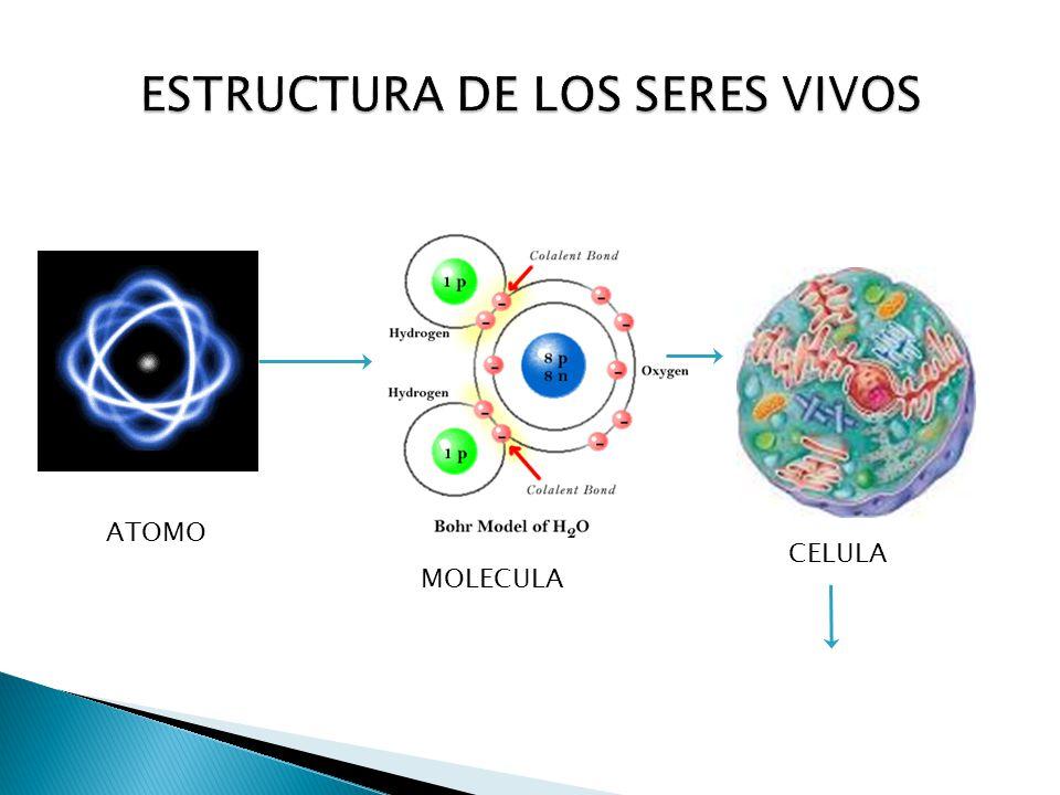 Composicion quimica de los seres vivos ppt descargar - Estructuras libros vivos ...