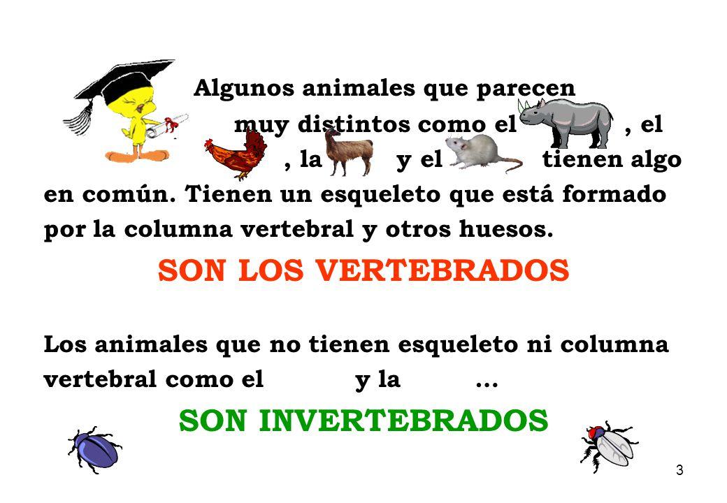 ANIMALES VERTEBRADOS E INVERTEBRADOS - ppt descargar