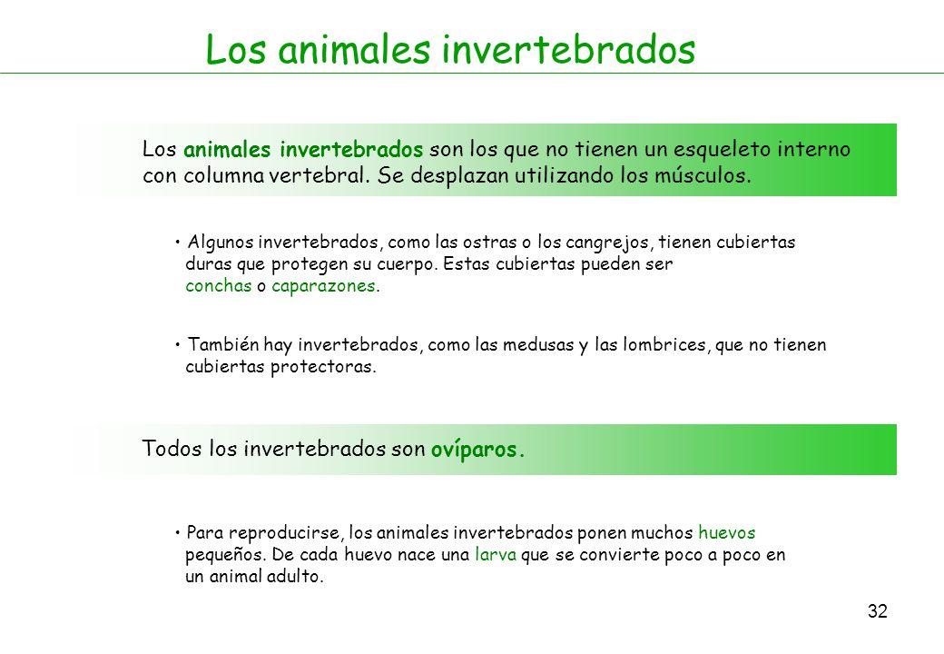 Animales vertebrados e invertebrados ppt descargar - Como se alimentan las medusas ...