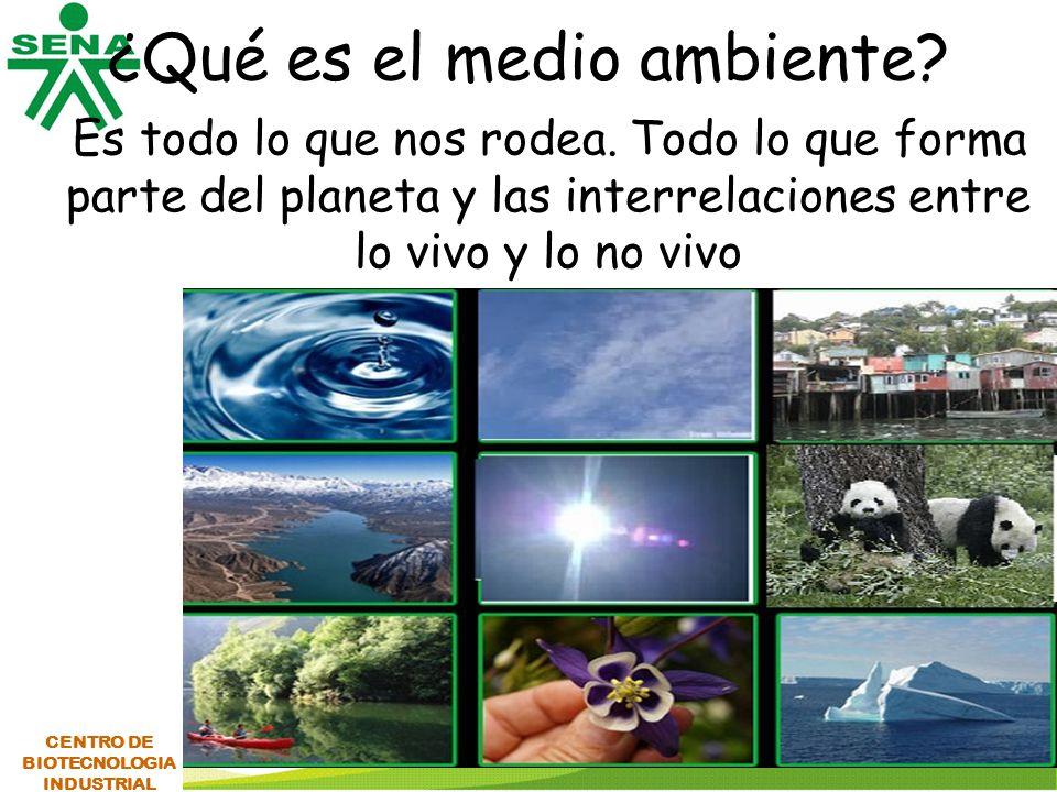 ¿Qué es el medio ambiente