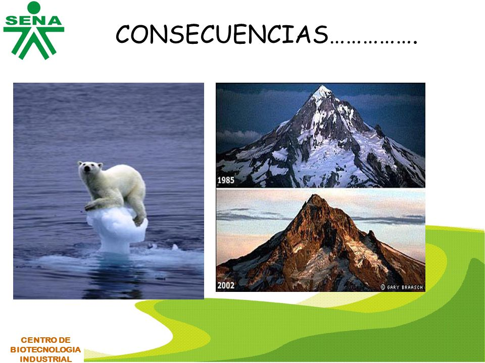 CONSECUENCIAS……………. CENTRO DE BIOTECNOLOGIA INDUSTRIAL