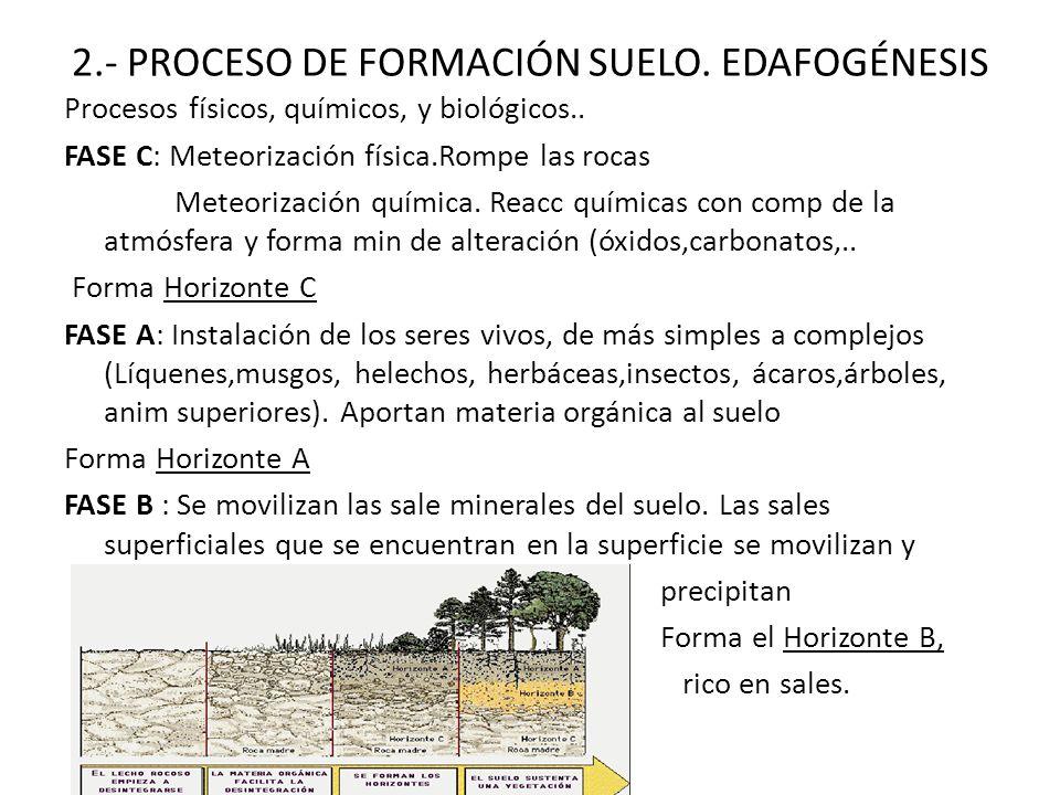 Unidad 10 el suelo ppt descargar for Proceso de formacion del suelo