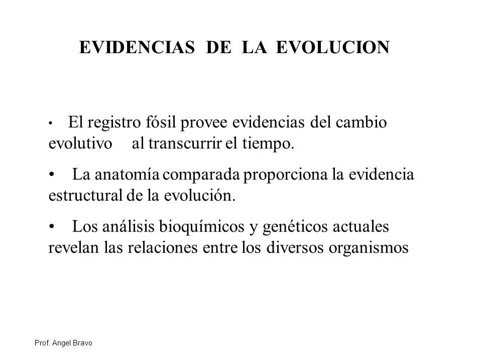 Perfecto Cómo La Anatomía Proporcionar Evidencia De La Evolución ...