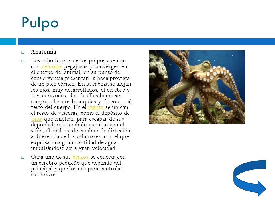 Lujo Anillado Azul Anatomía Pulpo Viñeta - Imágenes de Anatomía ...