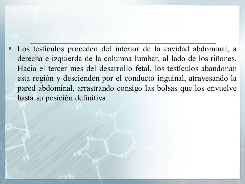 el esteroide anabolico mas seguro