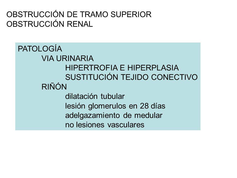 OBSTRUCCIÓN DE TRAMO SUPERIOR