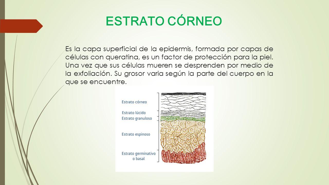 ESTRATO CÓRNEO