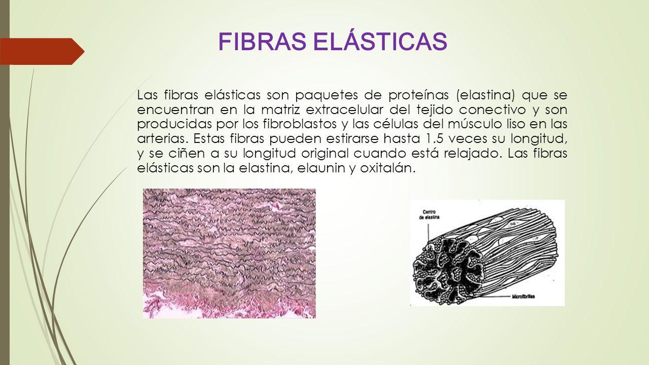 FIBRAS ELÁSTICAS
