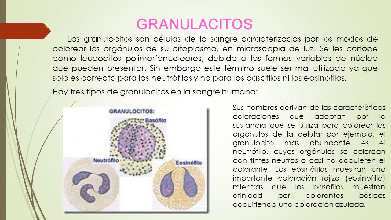 GRANULACITOS