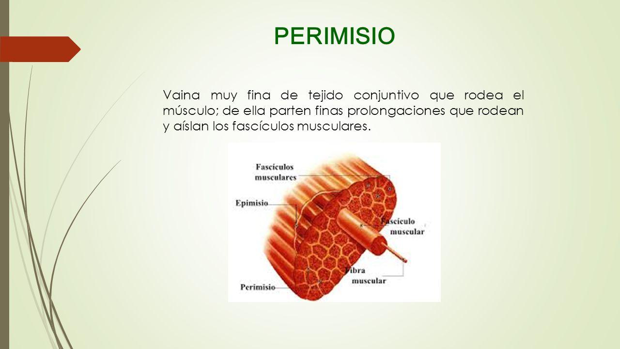 PERIMISIO