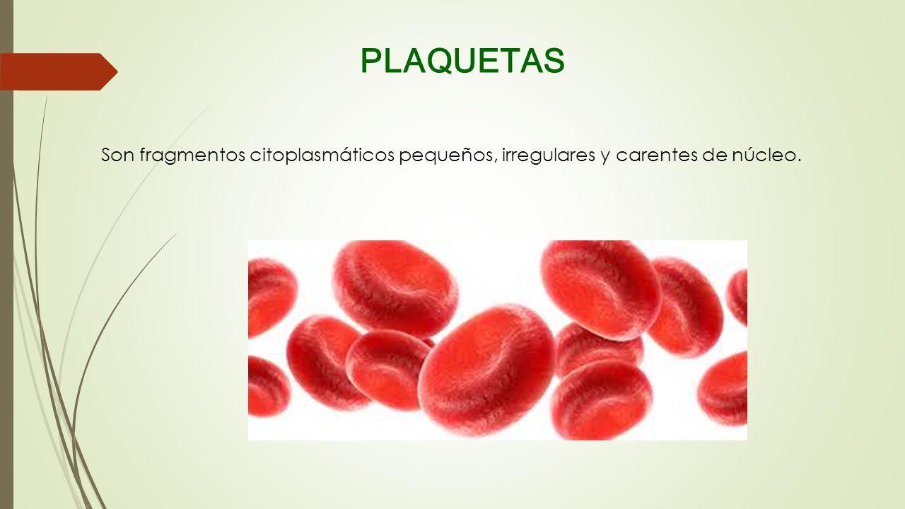 PLAQUETAS Son fragmentos citoplasmáticos pequeños, irregulares y carentes de núcleo.