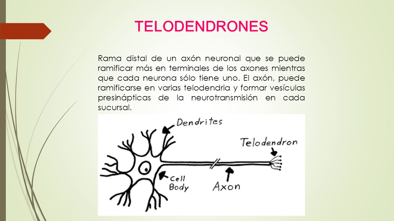 TELODENDRONES