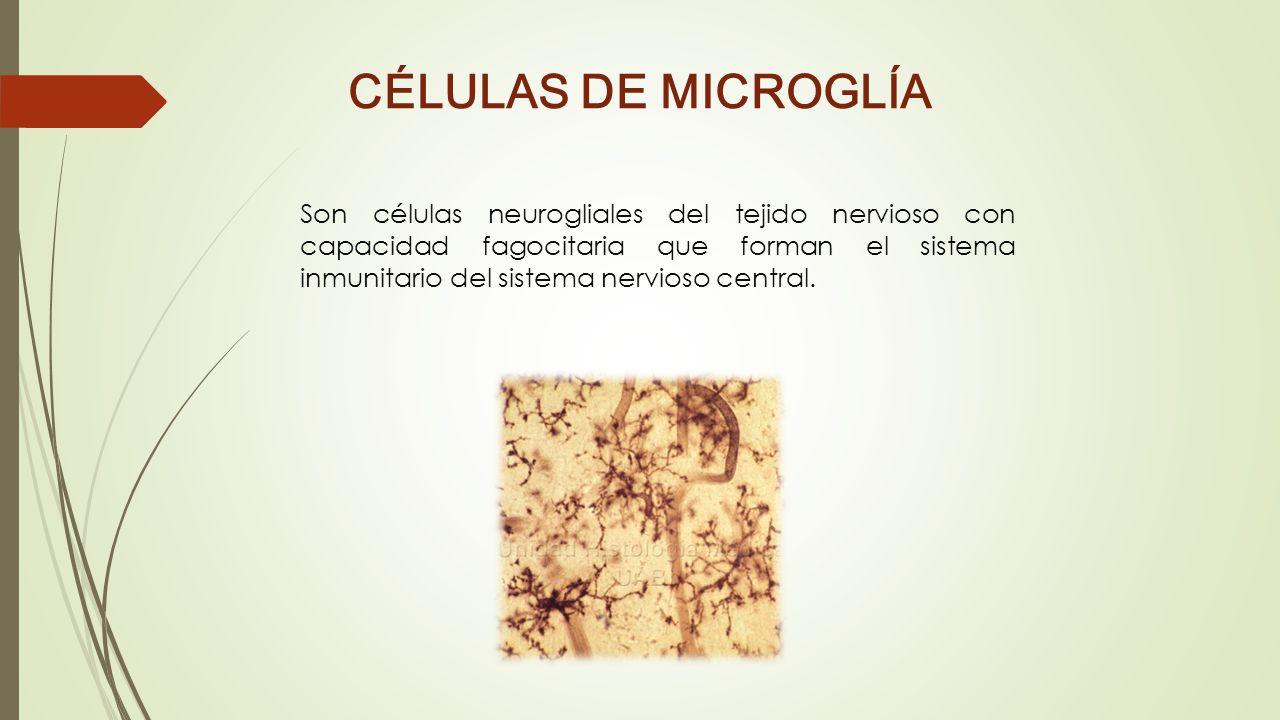 CÉLULAS DE MICROGLÍA