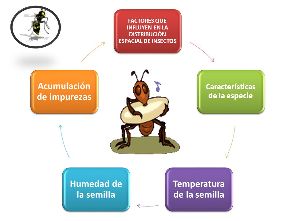 Universidad aut noma agraria antonio narro divisi n de - Soluciones para mosquitas de la humedad ...