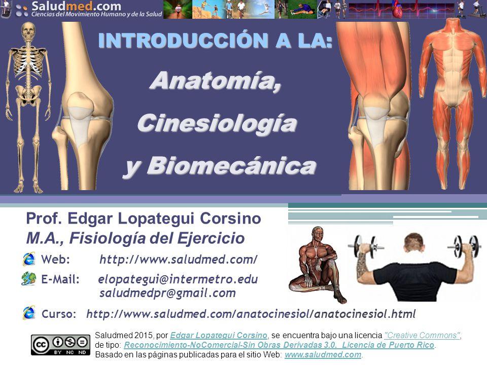 Perfecto Introducción A La Anatomía Y Fisiología Bandera - Imágenes ...