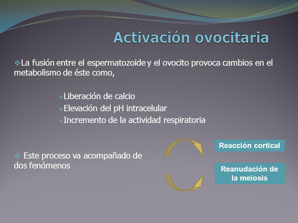 FECUNDACION Bioquímica Frazer Paula. - ppt video online descargar