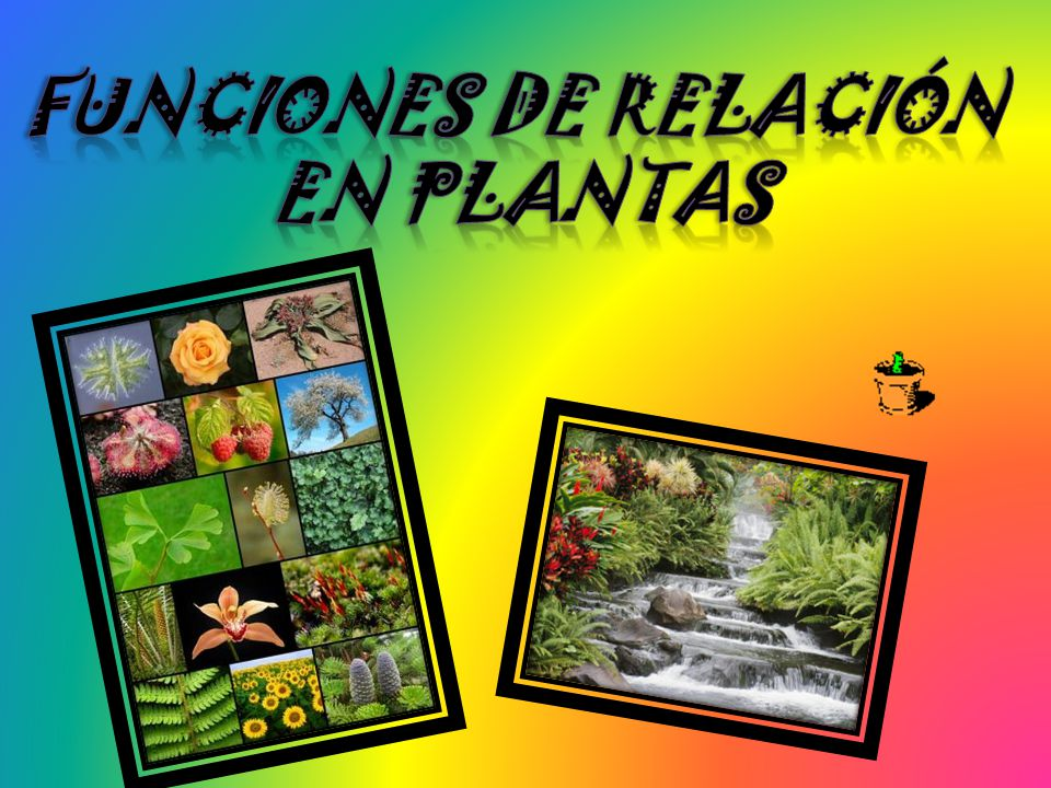 Funciones de relación en plantas