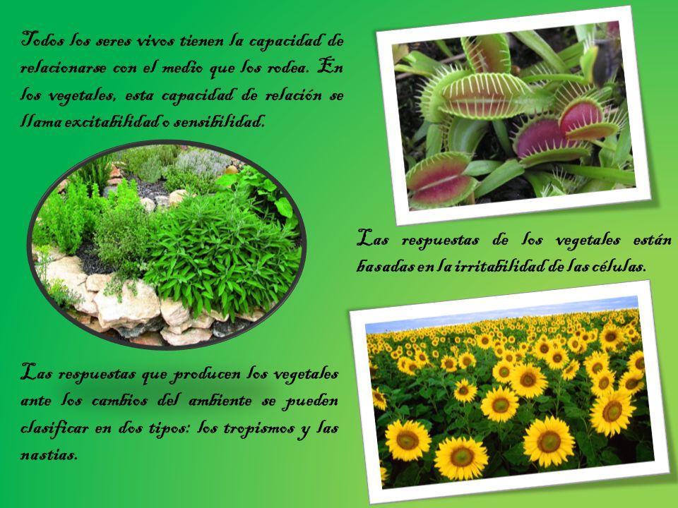 Todos los seres vivos tienen la capacidad de relacionarse con el medio que los rodea. En los vegetales, esta capacidad de relación se llama excitabilidad o sensibilidad.