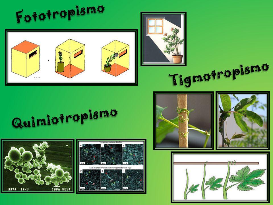 Fototropismo Tigmotropismo Quimiotropismo