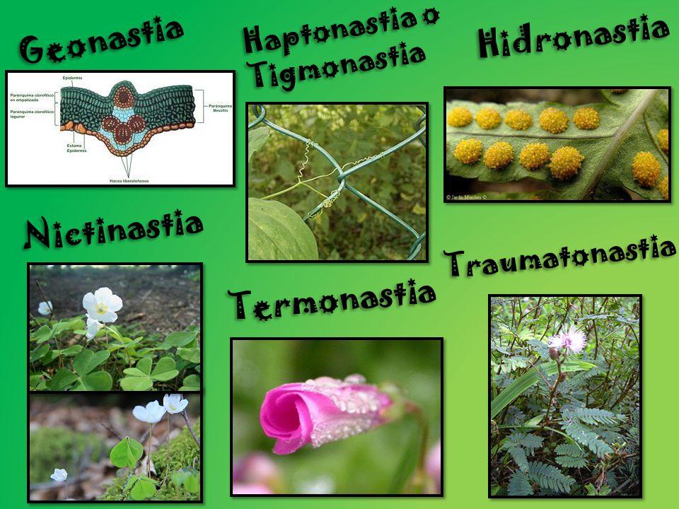 Geonastia Hidronastia Nictinastia Termonastia Haptonastia o