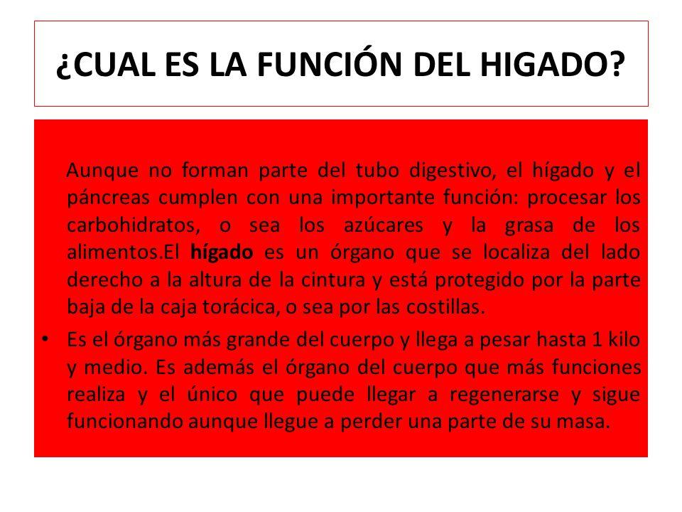 Lujoso La Función Del Estómago Viñeta - Anatomía de Las Imágenesdel ...