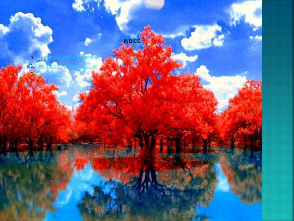 Nombre pamela inzunza hernandez ppt video online descargar for Arboles para veredas hojas perennes