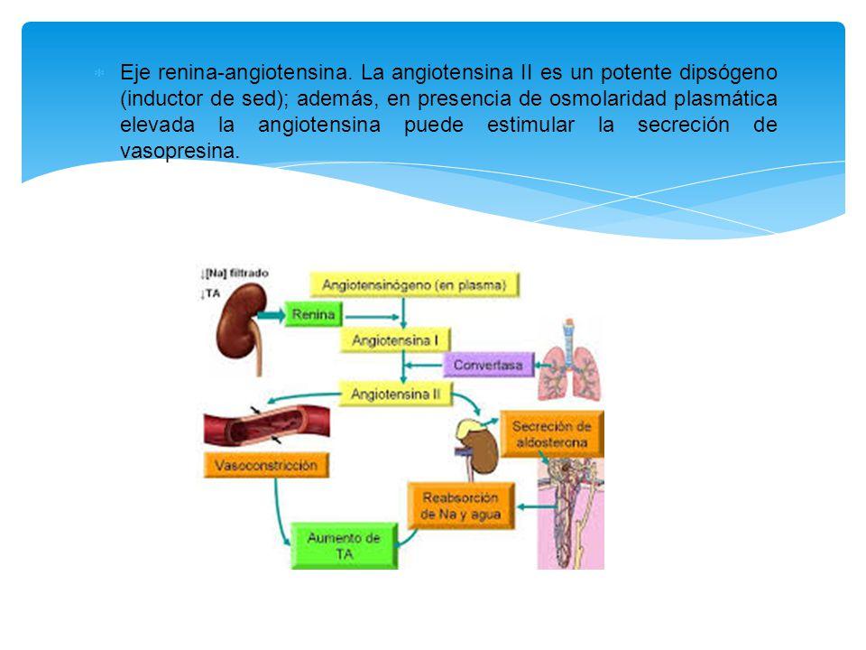 Eje renina-angiotensina