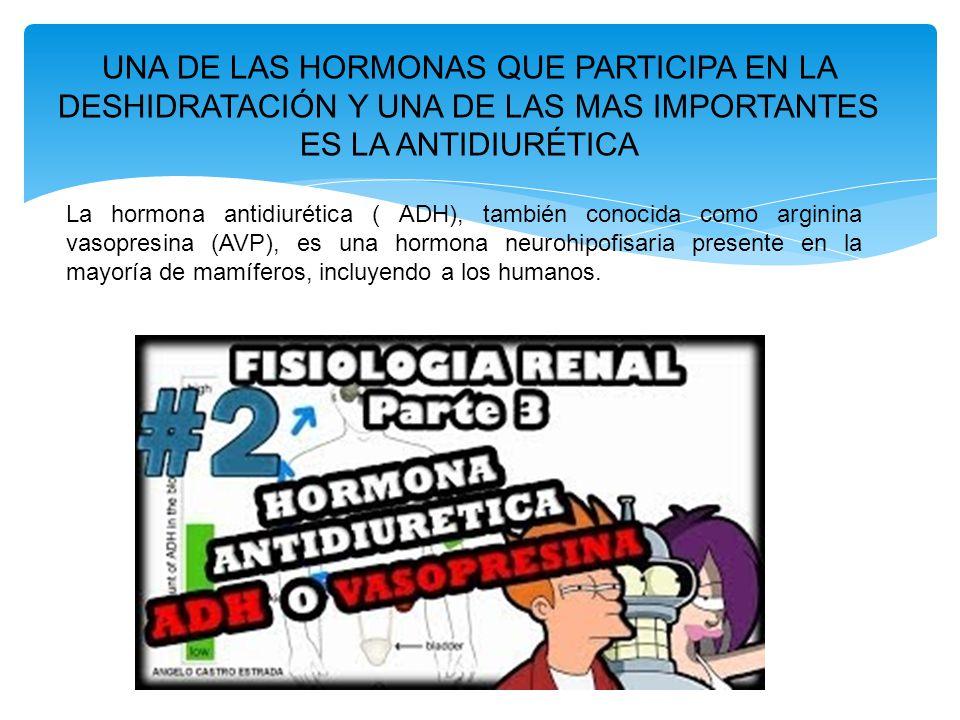 UNA DE LAS HORMONAS QUE PARTICIPA EN LA DESHIDRATACIÓN Y UNA DE LAS MAS IMPORTANTES ES LA ANTIDIURÉTICA