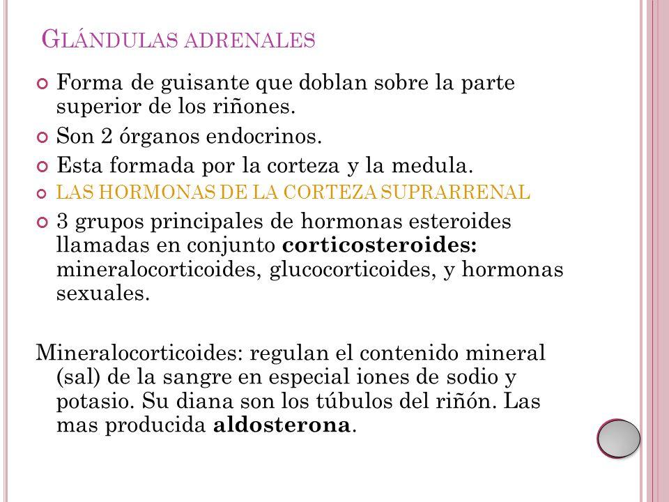 Lujoso órganos Endocrinos Imágenes - Imágenes de Anatomía Humana ...