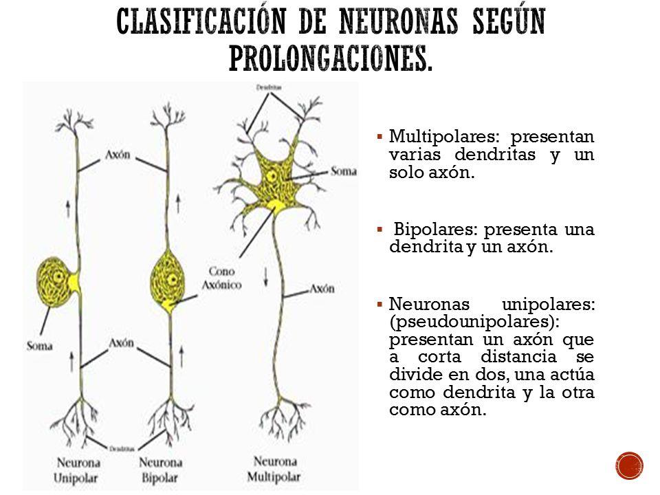 Qu es el sistema nervioso Que funcin cumple  ppt video