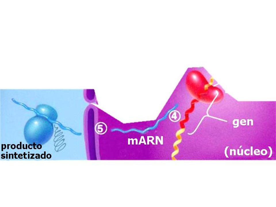 Hormonaas esteroideas lipo-solubles