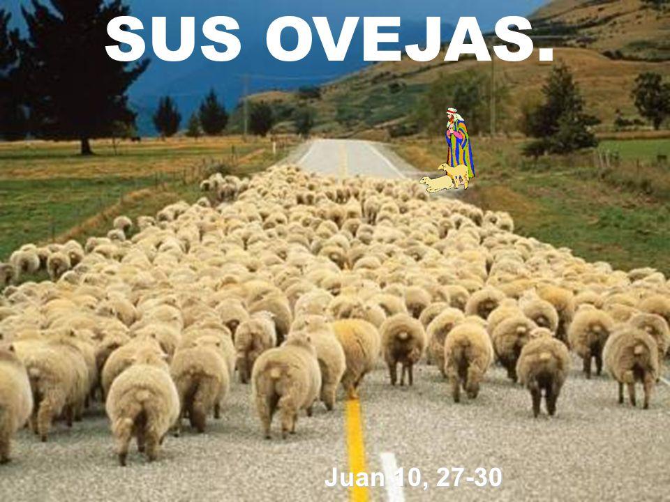 SUS OVEJAS. Juan 10, 27-30