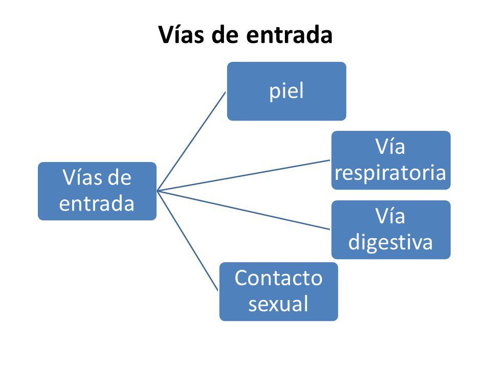 Vías de entrada Vías de entrada piel Vía respiratoria Vía digestiva
