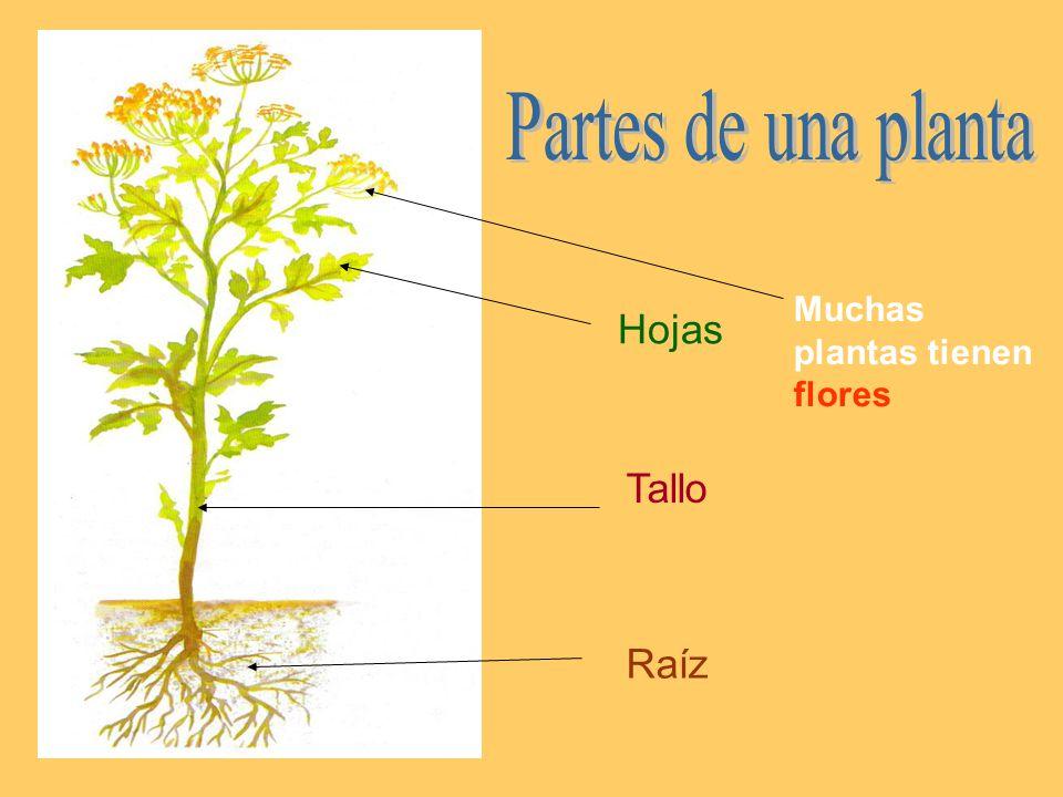 Las plantas plantas seres vivos partes de una planta la for Partes de una griferia de ducha