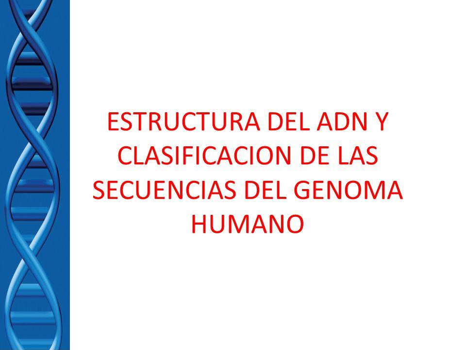 Estructura Del Adn Y Clasificacion De Las Secuencias Del Genoma Humano