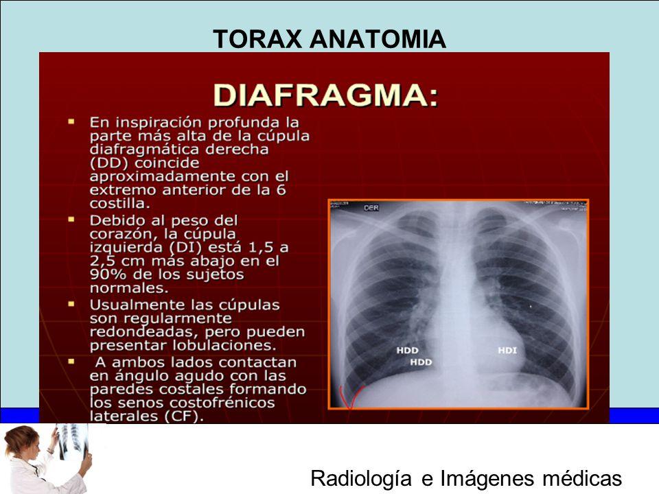 Atractivo Anatomía De La Radiología Ilustración - Imágenes de ...