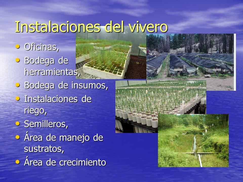 Viveros Forestales Generalidades Ppt Video Online Descargar