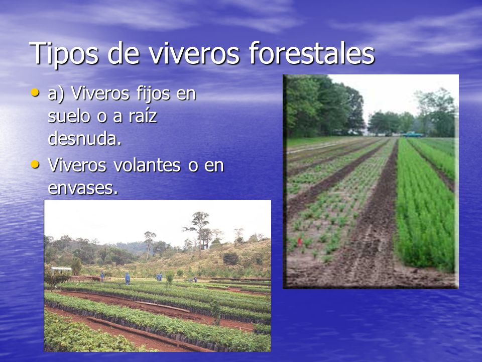 Viveros forestales generalidades ppt video online descargar for Proyecto productivo de vivero forestal