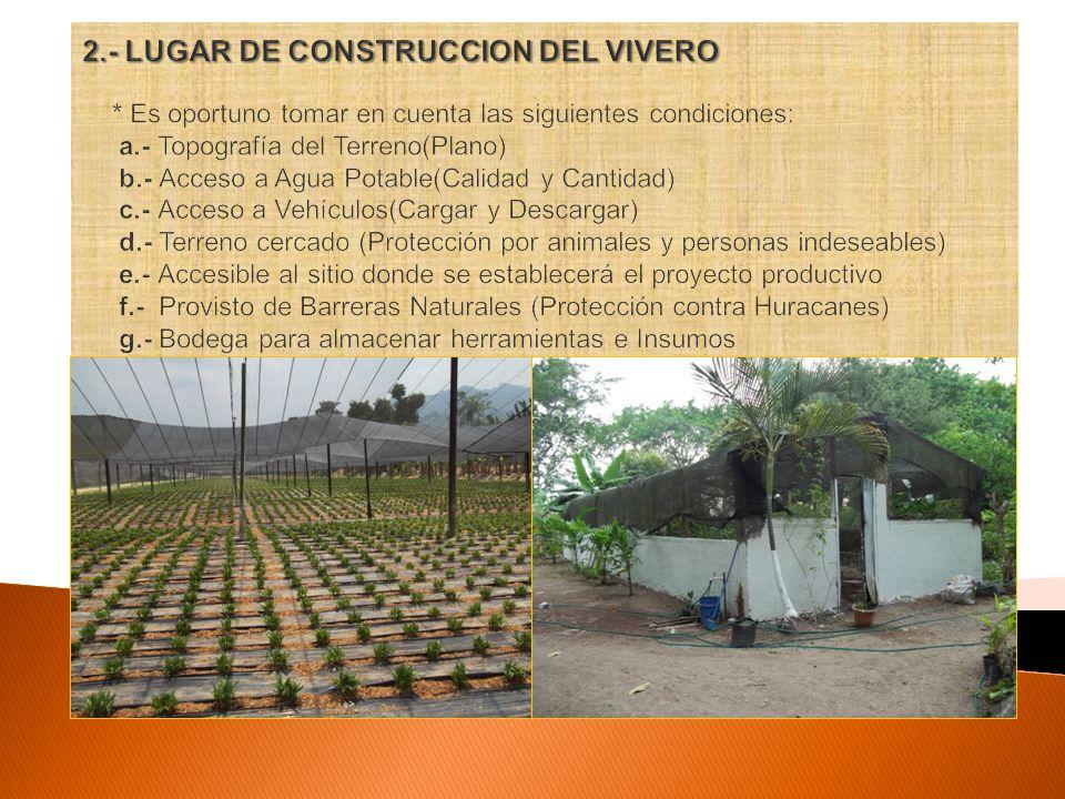 Unah curla departamento de produccion vegetal seccion de for Construccion de viveros