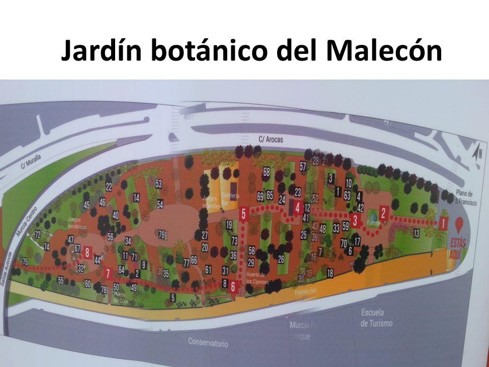 Jard n bot nico del malec n ppt descargar for Jardin botanico numero telefonico