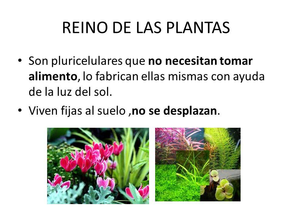 Clasificaci n en 5 reinos ppt descargar - Plantas que no necesitan luz ...