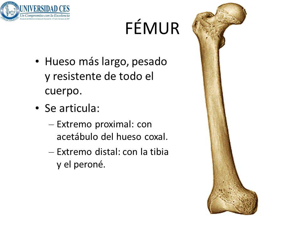 Lujo Hueso Peroné Componente - Imágenes de Anatomía Humana ...