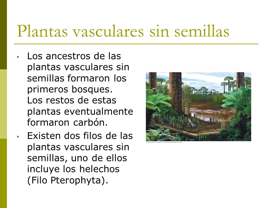 Diversidad de plantas biol ppt video online descargar for Plantas sin semillas