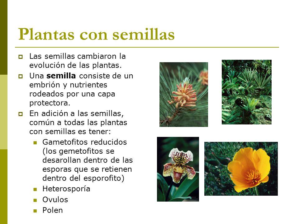 Diversidad de plantas biol ppt video online descargar for Que es un vivero de plantas