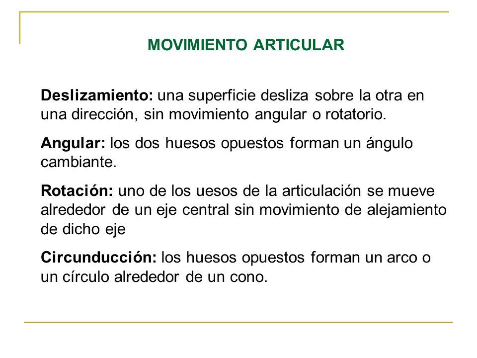 Magnífico Deslizándose Articulaciones Ideas - Imágenes de Anatomía ...