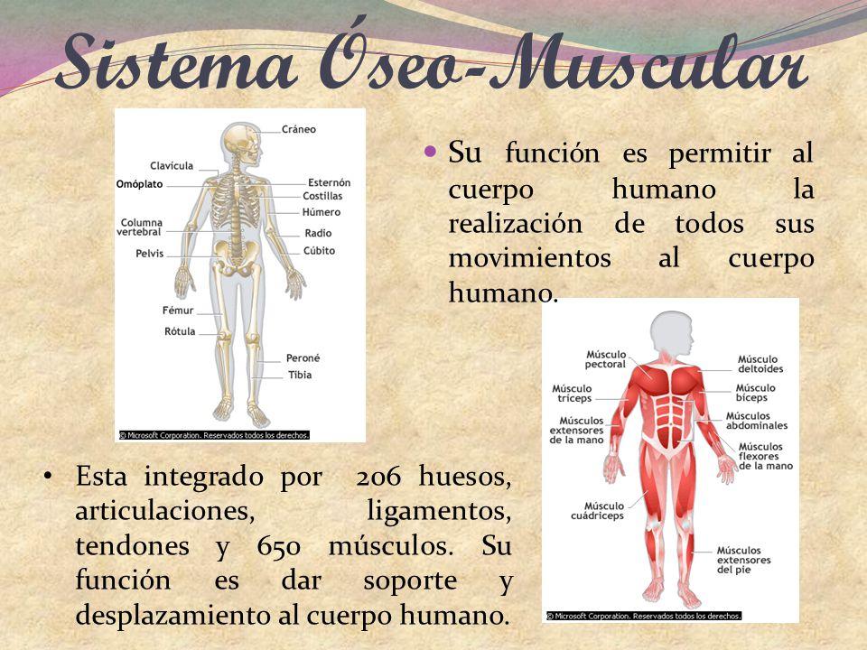Conocimiento del Cuerpo Humano - ppt descargar