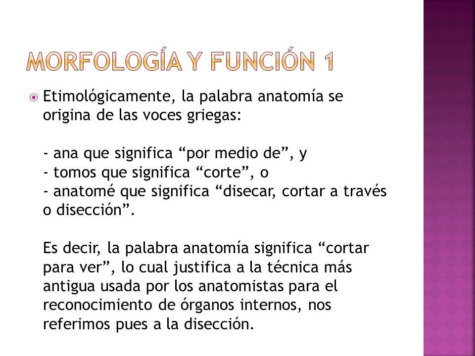 Magnífico Qué Significa La Palabra Anatomía Elaboración - Anatomía ...