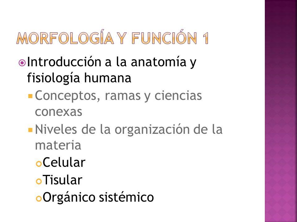 Vistoso Introducción A La Anatomía Y Fisiología De Powerpoint ...